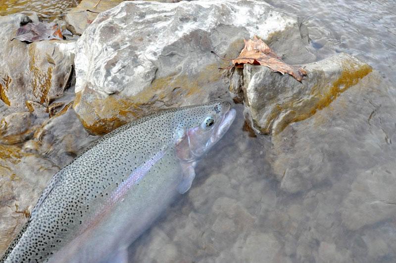 Fishing Monroe County - Salmon fishing map us